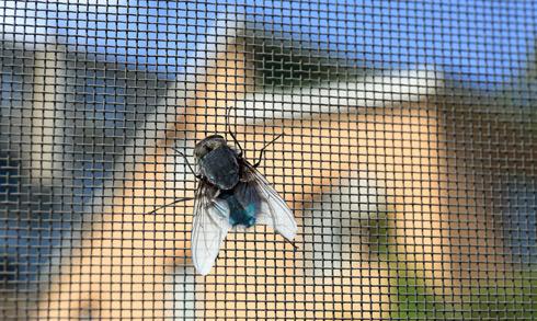fangmann-insektenschutz